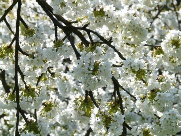 franchise small business news for april and image of cherry blossoms