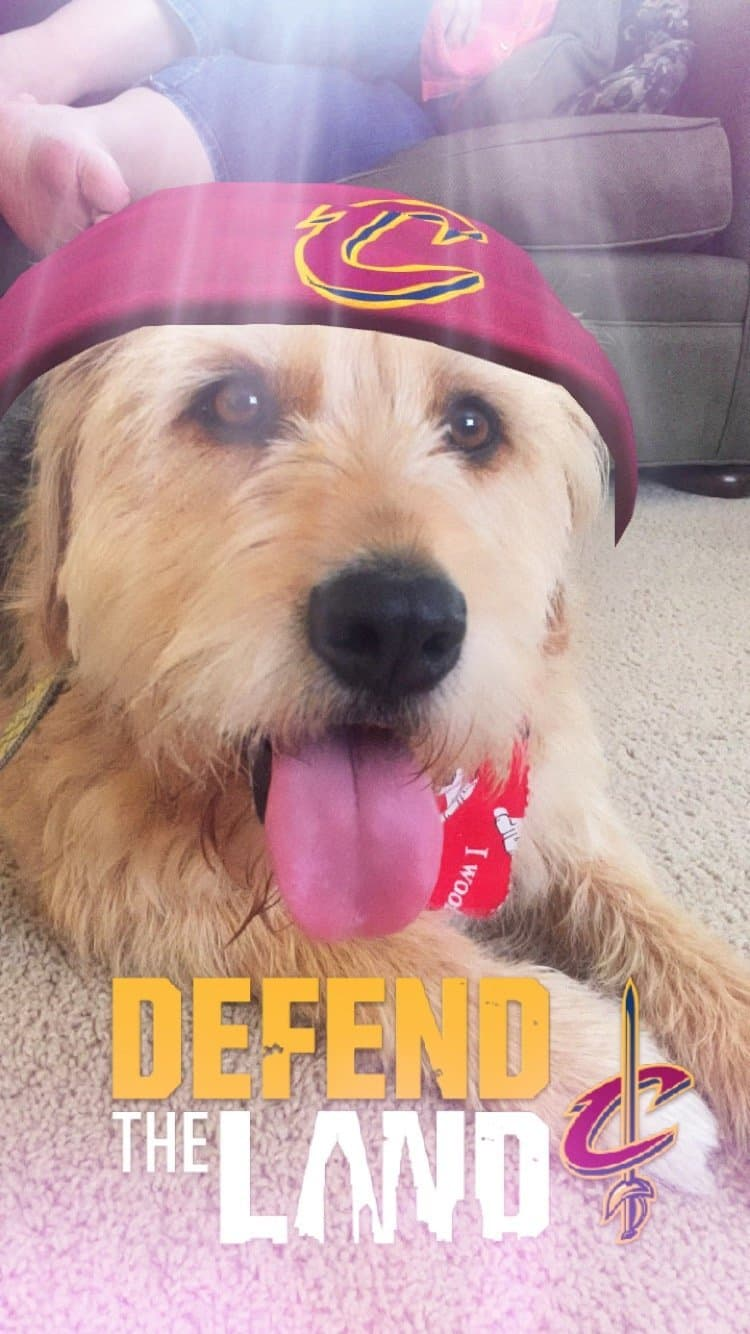 Even @FranchiseDog Is All In For Game 7 Of The NBA Finals (With Updates)
