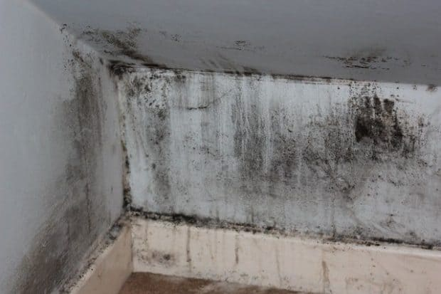 black mold in basement