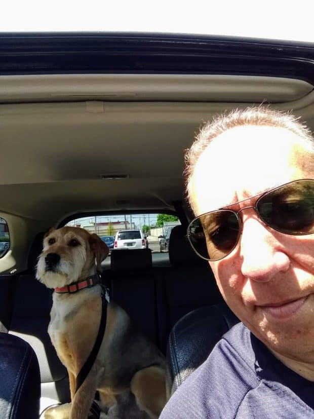 car ride with my dog