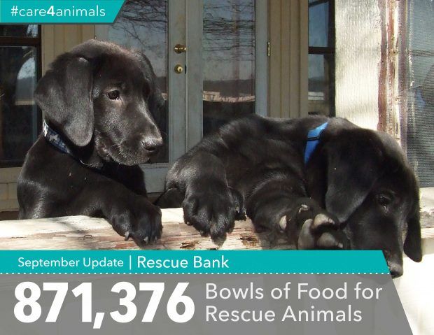 rescue bank care for animals causely