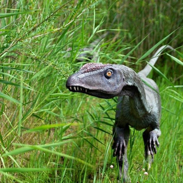 1-800-dinosaur franchise