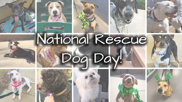 pet butler and dog rescue organizations