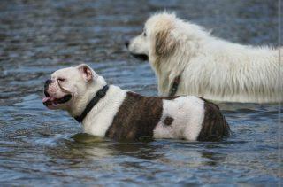 stanislaw dog image