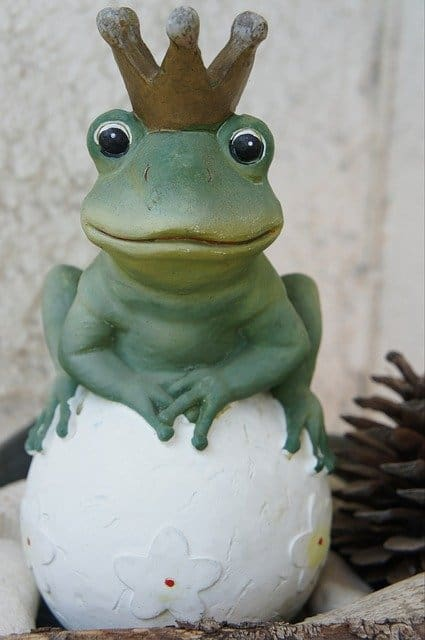 fun frog with a crown