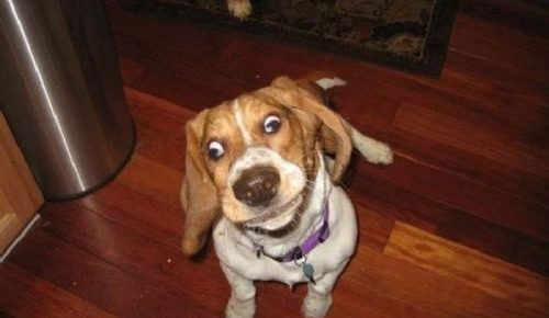 a funny doggie