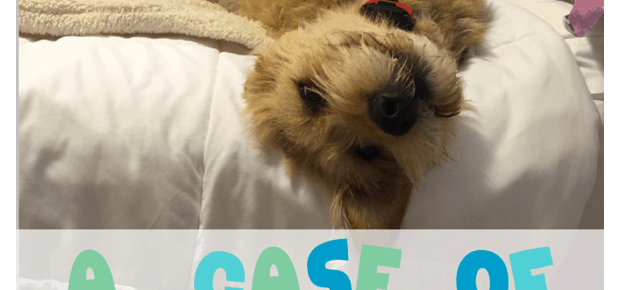 @franchisedog on Twitter all about dog hotels